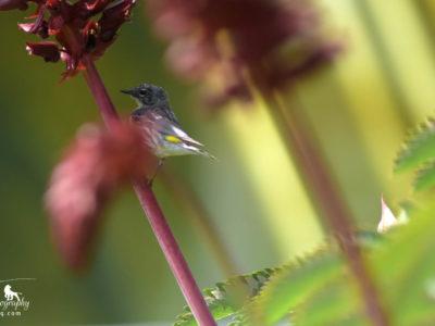 FA-Bird On Flower-1431